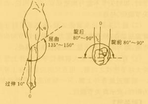 滑车上淋巴结位置-华医网 推拿常用诊断方法